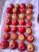 Export bulk fresh red delicious paper bagged qinguan apple in Shanxi