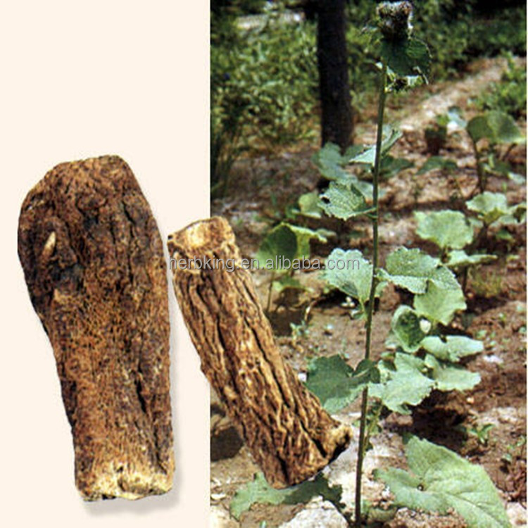 Costus Root Extract powder 10:1 Radix Inulae/costus root p.e.