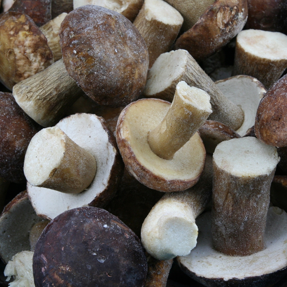 July And August Freshly Harvested Boletus Hot Sale