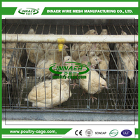 Poultry equipments quails cage for sale