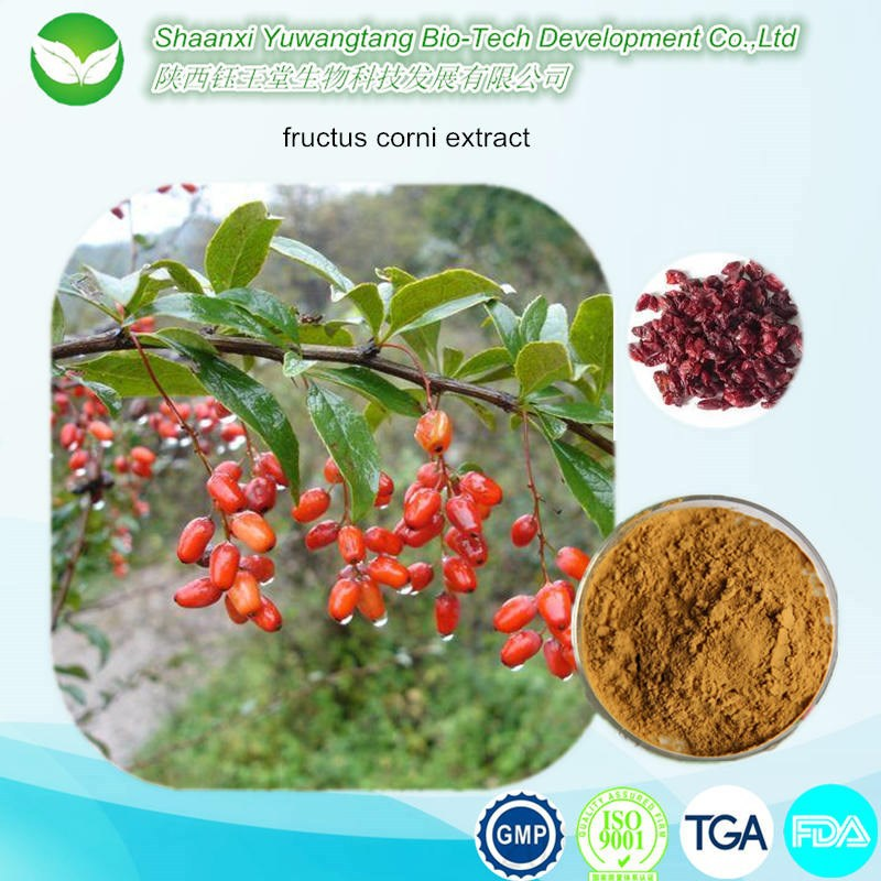 chinese herb medicine for long time sex fructus corni extract