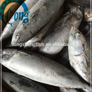 2018 Fresh Frozen mackerel fish frozen BONITO for sale