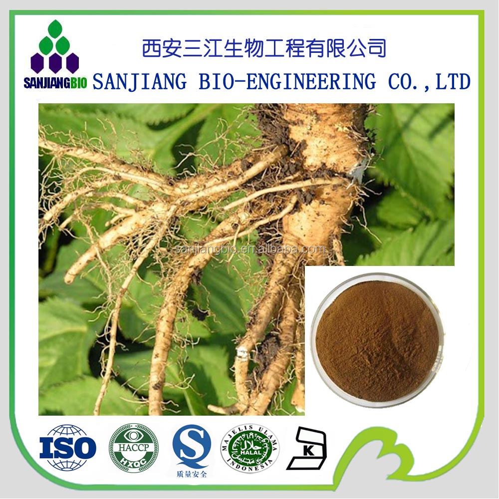 Best regulating menstruation herbal angelica sinensis root extract 1% ligustilides powder,angelica