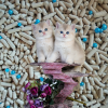 terrific quality comfortable for home cats strip shape baby powder bentonite clay litter bulk