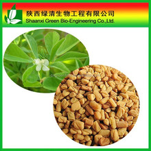100% Indian fenugreek seeds extract/Blue fenugreek extract powder