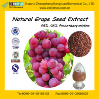 GMP certified factory supply high quality Grape Seed Plant Extract powder