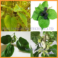 Mulberry Leaf P.E/ mulberry leaf extract /mulberry leaf powder DNJ