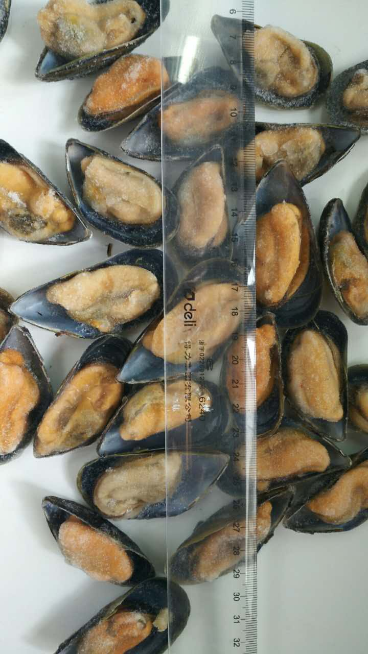 frozen mussel in shell