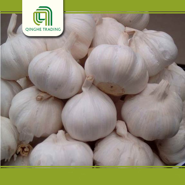 Hot selling red garlic with great price