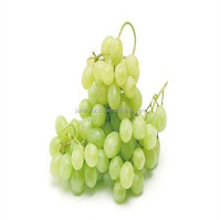 Wholesale new crop Grade B grape juice