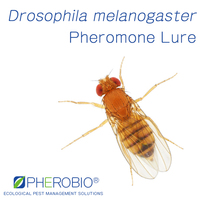 Pheromone lure for Drosophila melanogaster and trap set