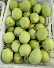 Top quality sweet juice China shandong pear