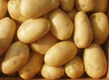Wholesale bulk potato specifications