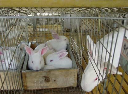 3 tiers 12 doors rabbit breeding used rabbit cages for sale in pakistan