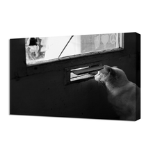 Large size canvas print wall art black photo cat images
