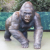 large outdoor garden decor bronze chubby gorilla statue for sale