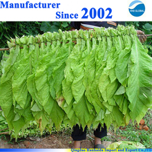 Top quality Solanesol 13190-97-1 tobacco extract Solanesol powder with best price and fast delivery on hot selling !!
