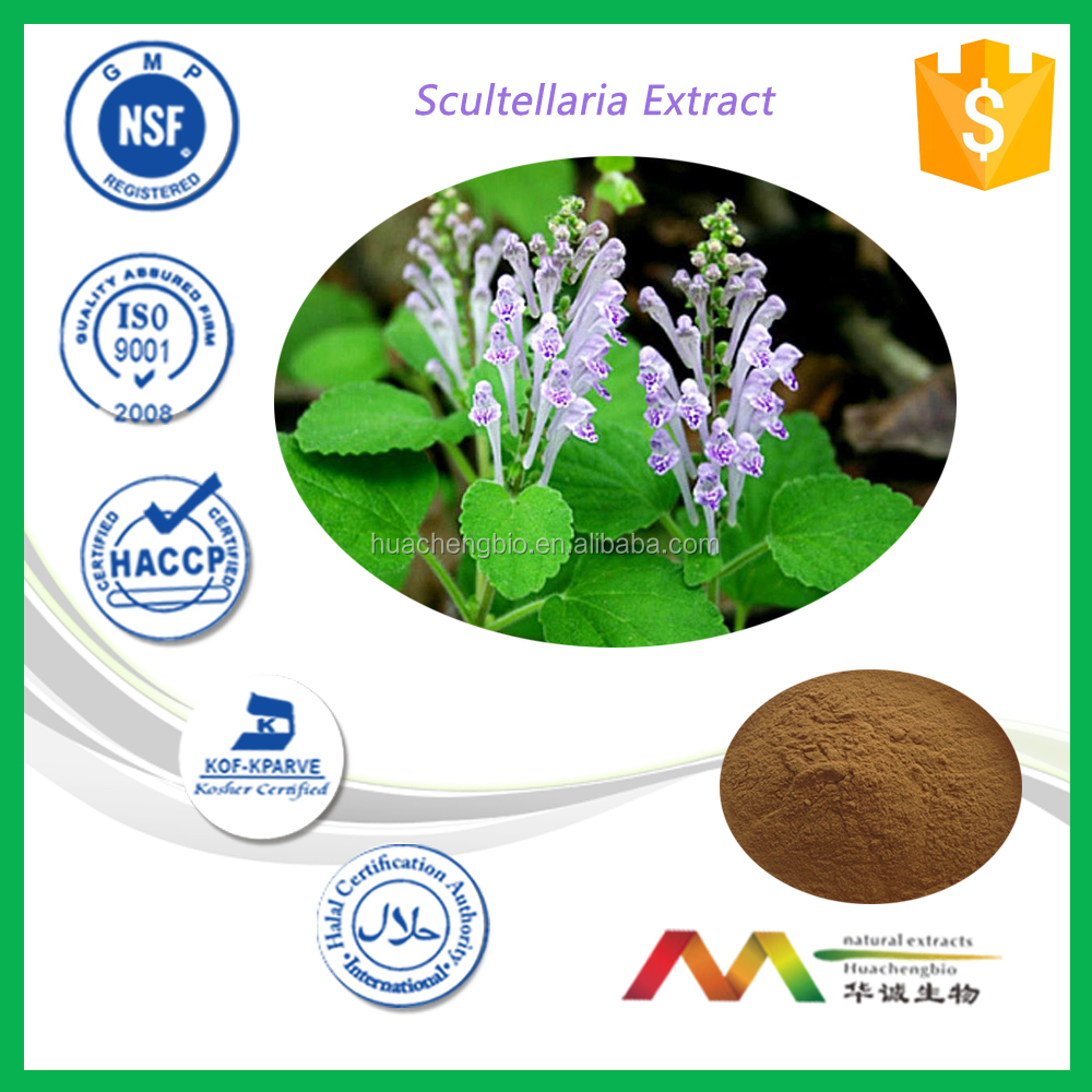NSF-cGMP Manufacturer Natural Free Sample Scultellaria Extract