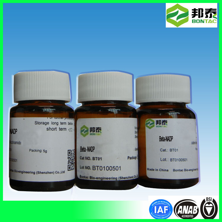 Cheap price Nicotinamide Adenine Dinucleotide Phosphate Disodium CAS NO.24292- 60-2 NADP