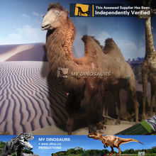 MyDino-R robotic animal camel model exporters with real fur