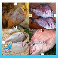 supply new catching fresh whole seabream fish