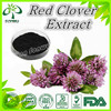 High Quality red clover extract for isoflavone