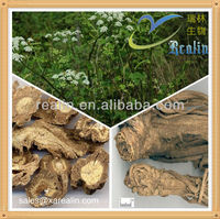 High quality Doubleteeth Angelica Root Extract,Doubleteeth Angelica Root PE