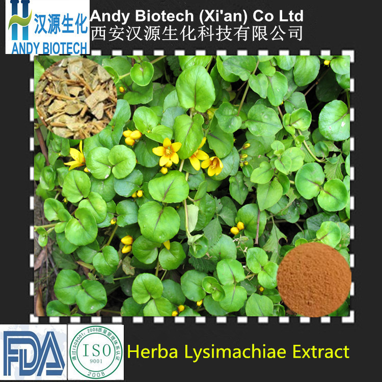 100% Natural Good Quality Free Sample Herba Lysimachiae Extract