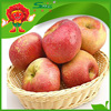 best health benefit fruits top quality fuji apples from China red fuji apple