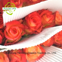 Big Rose Flower Different Types Of Fire Red Roses 60-80cm Long Konfetti Rose From Yanbing/yunnan