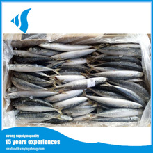 90/100g horse mackerel /Muroaji fresh sea fish with reasonable prices from China for sale