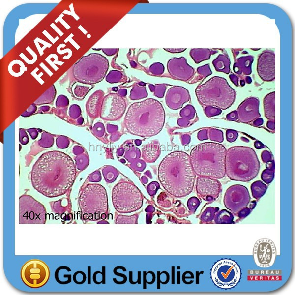 Easy to be used Medical lab disposable glass microscope slides