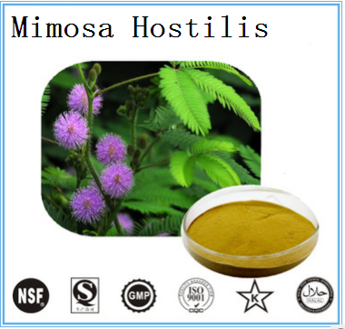 Mimosa hostilis root/leaf extract Sensitive Plant Extract