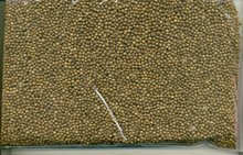 Coriander seeds light brown colour