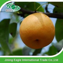 Chinese farm supply sweet yellow fengshui pear