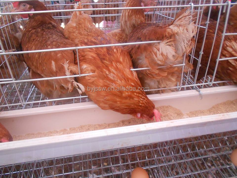 Quail Layer Cage Kanya Wholesale