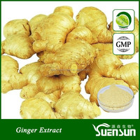 GMP factory steady supply organic ginger root extract