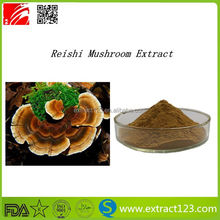 Purify your body health reishi p.e. extraction price red reishi mushroom