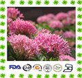 Factory supply rhodiola rosea powder extract Salidroside and Rosavins / Rhodiola rosea extract 1%,2%,3%,5%