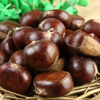 Wholesale Price Hebei Qianxi Chestnut