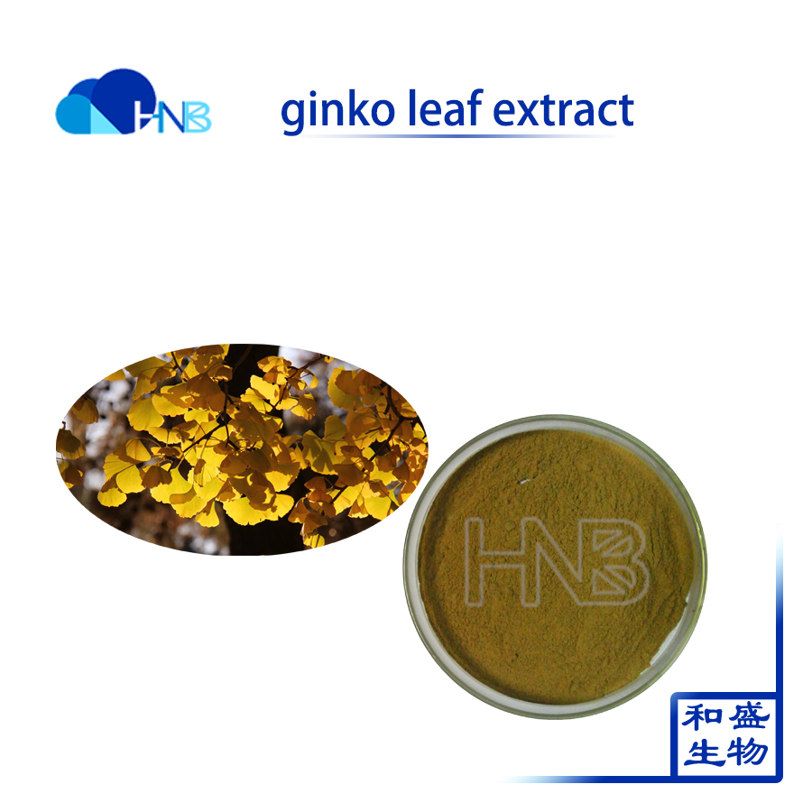 Ginkgo Biloba extract used for Natural Antihypertension medicine 24/6 Flavones 24% Terpene Lactones 6%