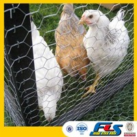 Hot Sale Chicken Coop Galvanized Wire Mesh
