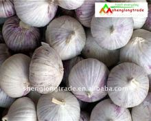 Solo garlic to sell low price