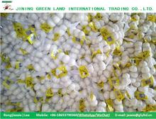 LOWEST CHINA WHITE GARLIC PRICE SELECTED HIGH QUALITY GARLIC FOR SALE