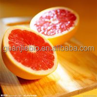 Manufacturer Supply Top Grade Organic Grapefruit Seed Extract