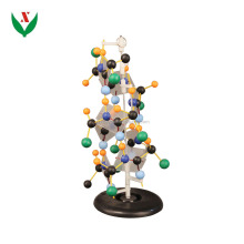 DNA structure model / biological / school teaching equipment