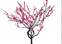 peach tree artificial plastic peach tree fake peach tree plant