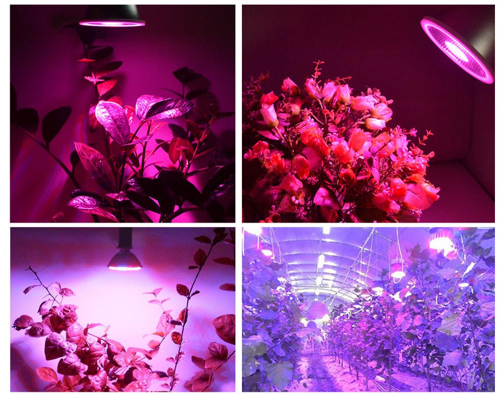 Competitive price 15W Par38 LED Grow Light Full Spectrum For Hydroponic and indoor plants