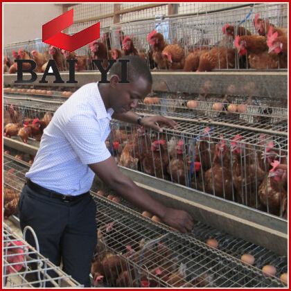 Kenya Chicken Farm Top Selling Layer Poultry Battery Cages For Sale