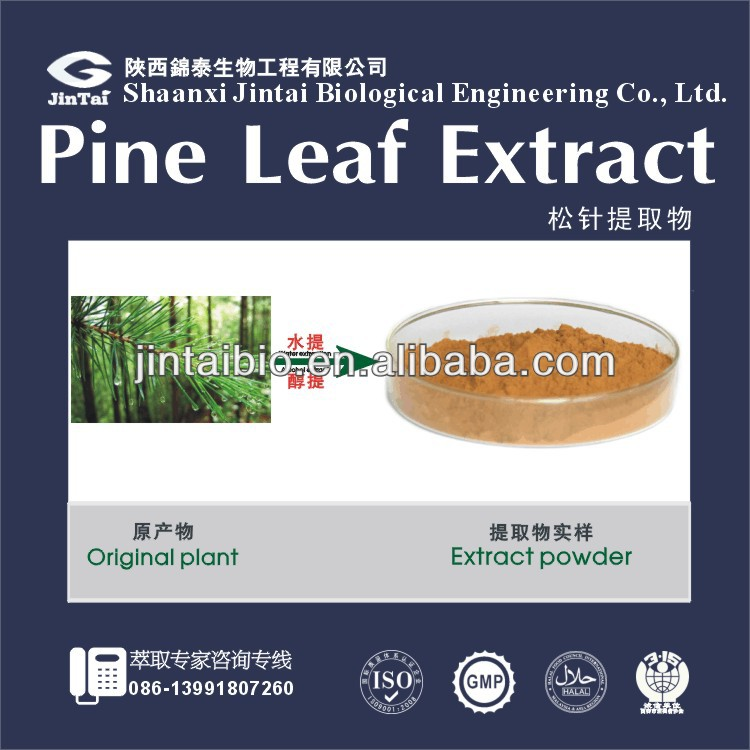 100% natural herb medicine pine needle leaf extract